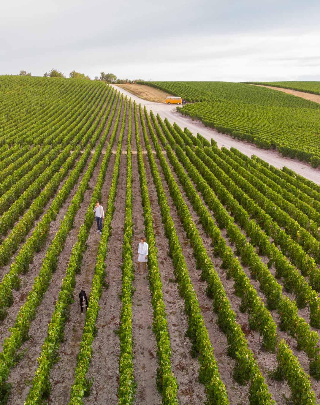 Reportage photo dans le vignoble du Champagne Antoine Chevalier - Agence Discovery Reims & Paris