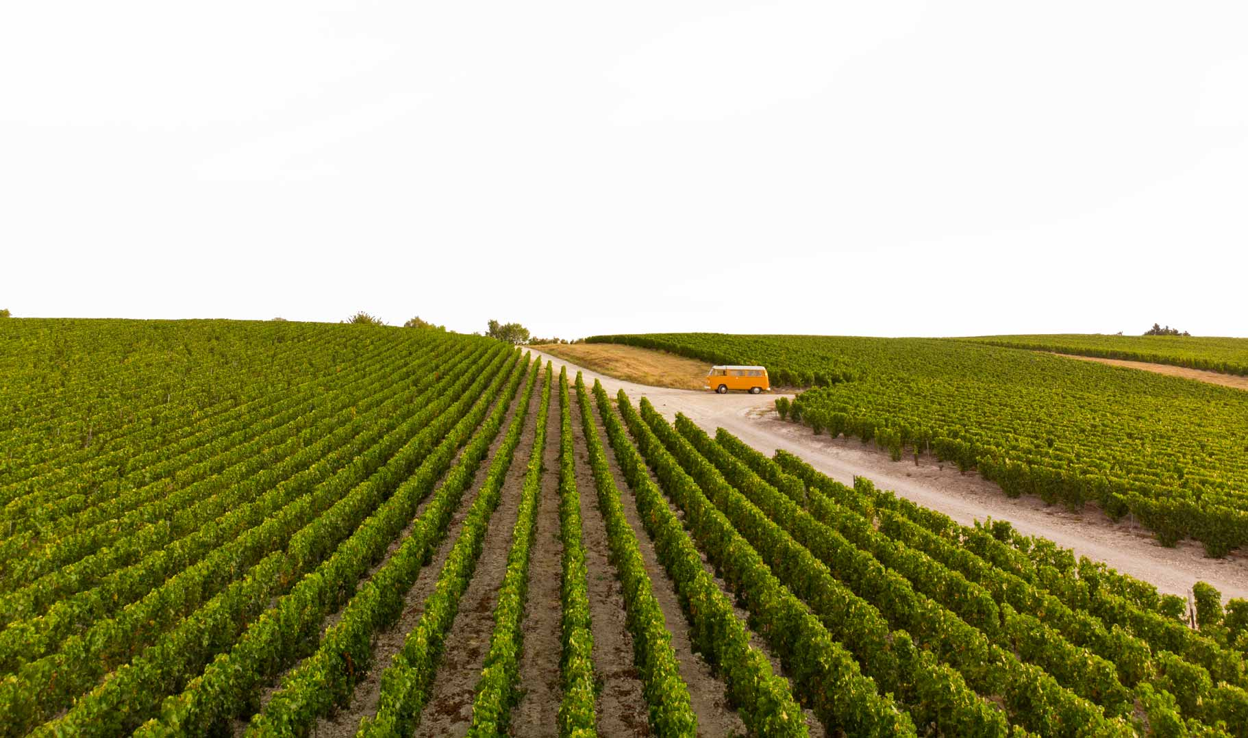 Reportage photo du vignoble Champagne Antoine Chevalier - Agence Discovery Reims & Paris