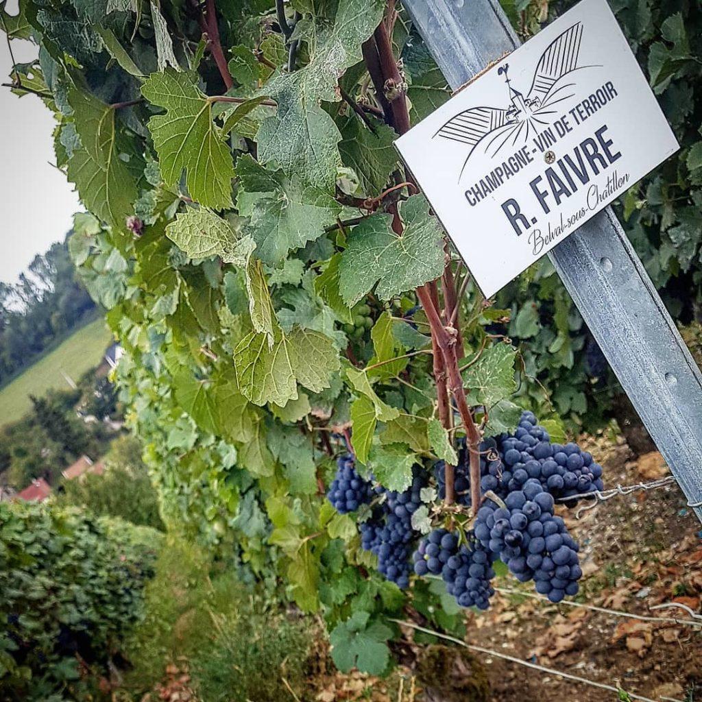 Route de vigne - Champagne R Faivre - Podcast Les Nouveaux Explorateurs - Agence Disovery Reims