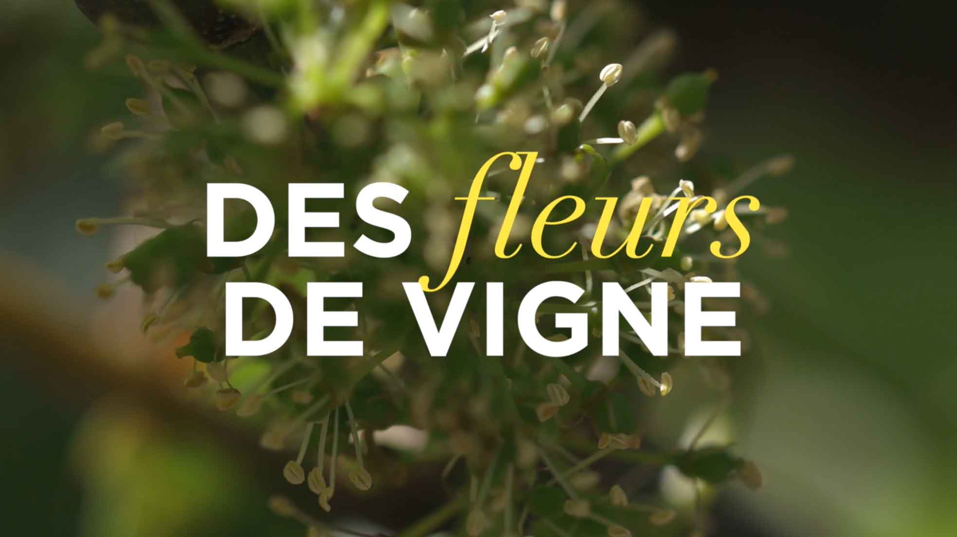 La fleur de vigne en Champagne par Nicolas Feuilllatte - Réalisation Agence Discovery