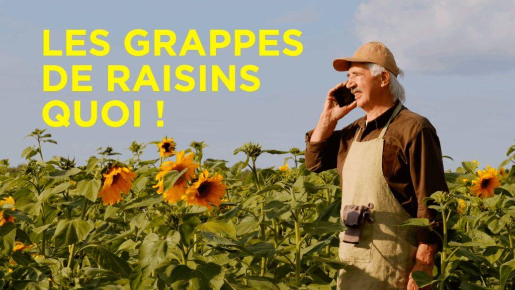 Fleur de vigne et grappe de raisins par le Champagne Nicolas Feuillatte - Réalisation Agence Discovery Reims