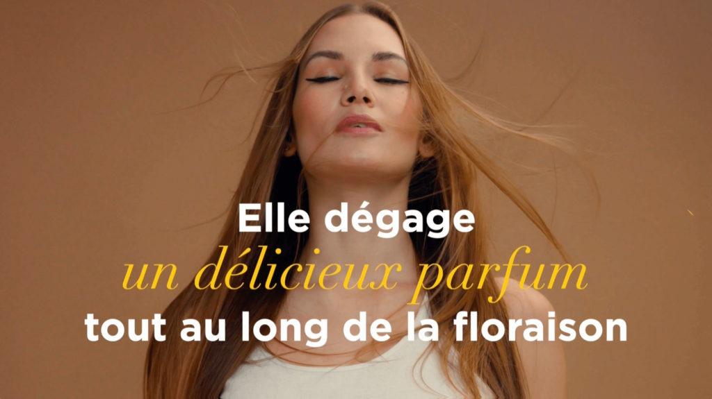 Le parfum de la fleur de vigne par le Champagne Nicolas Feuillatte - Réalisation Agence Discovery Reims